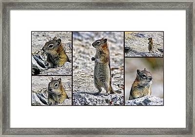 Chipmunk Collage Framed Print by Lynn Bolt