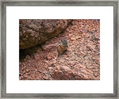 Chipmunk Eating Framed Print