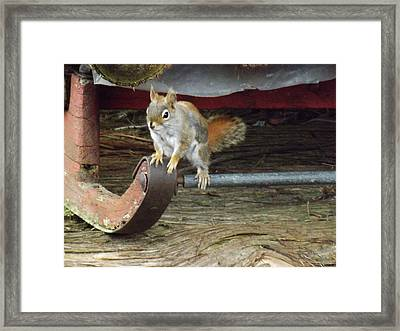 Chipmunk Hitch Hiker Framed Print