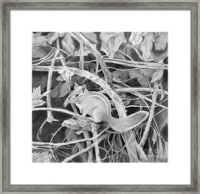 Chipmunk In The Bramble Bushes Framed Print