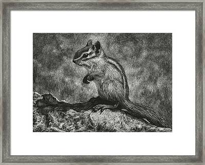 Chipmunk On The Rocks Framed Print by Sandra LaFaut