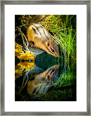 Chipmunk Reflection Framed Print by Bob Orsillo