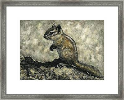 Chipmunk  Framed Print by Sandra LaFaut
