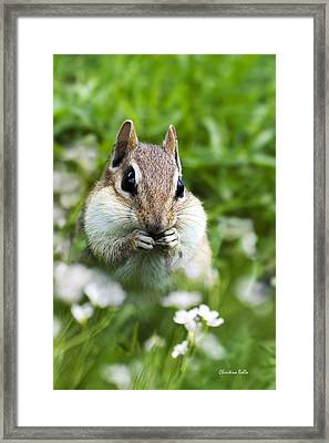 Chipmunk Subtle Strategist  Framed Print