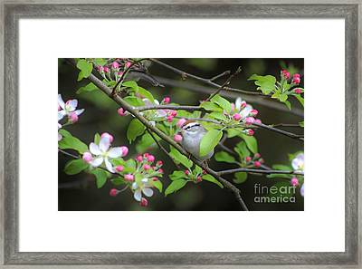 Chipping Sparrow Framed Print by Benanne Stiens
