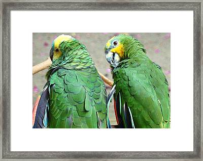 Chit And Chat Framed Print by Van Ness