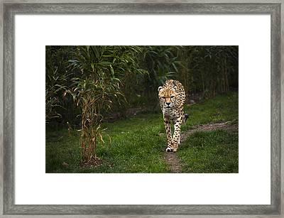 Chita Framed Print by Svetlana Sewell
