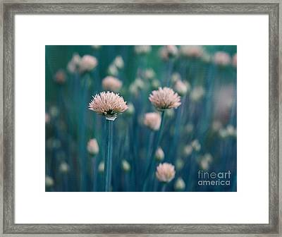 Chive Blues Framed Print by Irina Wardas