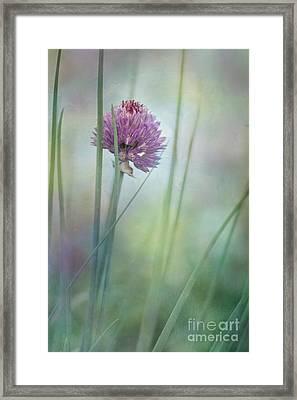 Chive Garden Framed Print by Priska Wettstein