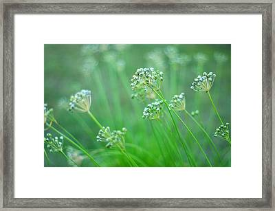 Framed Print featuring the photograph Chive Garden by Suzanne Powers