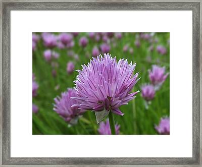 Framed Print featuring the photograph Chive by Gene Cyr