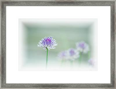 Chives Blowing In The Wind Framed Print by Rona Schwarz