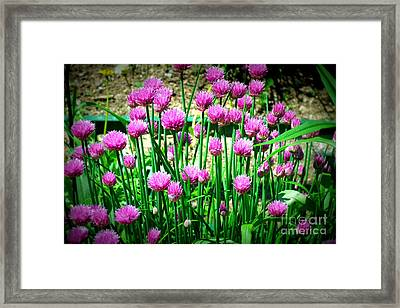 Chives Framed Print by Christy Beal
