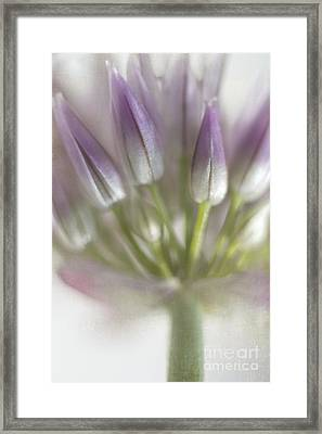 Chives Herb Framed Print