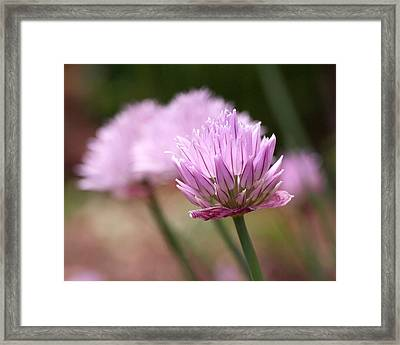Chives Framed Print by Rona Black