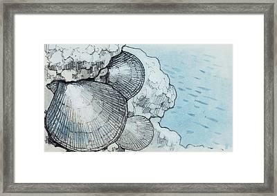 Chlamys Framed Print by Deagostini/uig