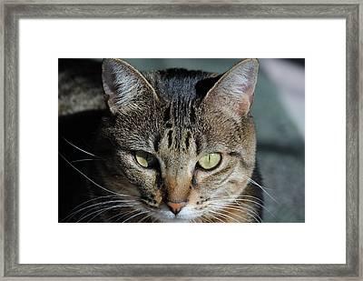 Chloe A Framed Print