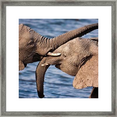 Chobe National Park, Botswana Framed Print