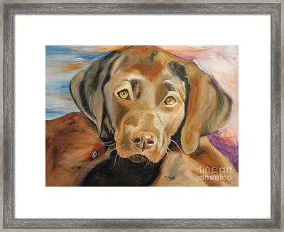 Chocolat Labrador Puppy Framed Print by PainterArtist FIN