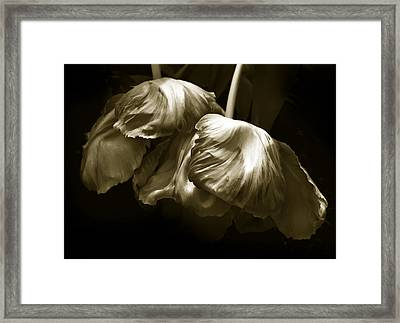 Chocolate Kisses Framed Print
