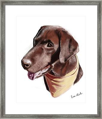 Chocolate Lab Framed Print by Eric Smith