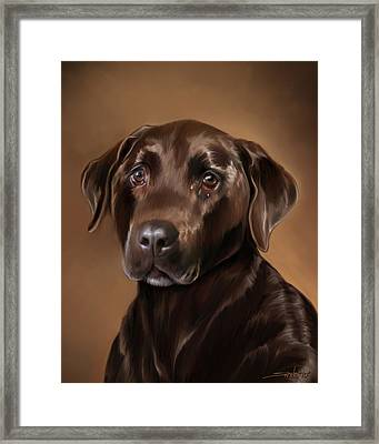 Chocolate Lab Framed Print by Michael Spano