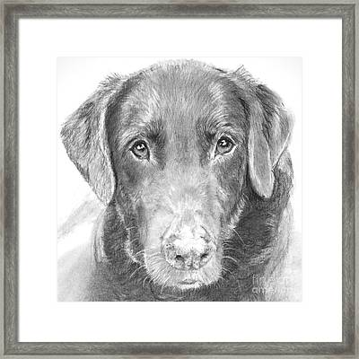 Chocolate Lab Sketched In Charcoal Framed Print by Kate Sumners