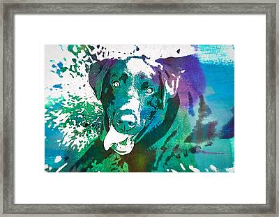 Chocolate Lab - Wc Framed Print