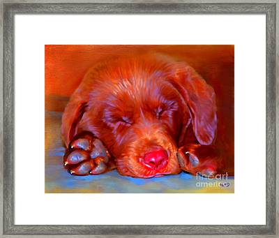 Chocolate Labrador Puppy Framed Print by Iain McDonald