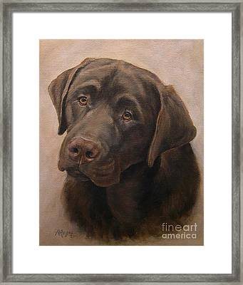 Chocolate Labrador Retriever Portrait Framed Print by Amy Reges