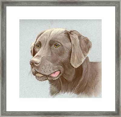 Chocolate Labrador Retriever Framed Print
