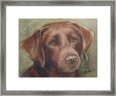 Chocolate Labrador Framed Print by Sciandra