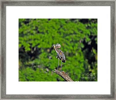 Choice Catch Framed Print