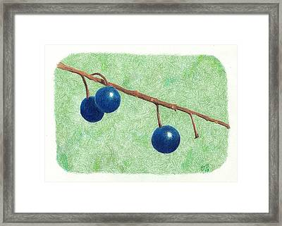 Choke Cherry Framed Print