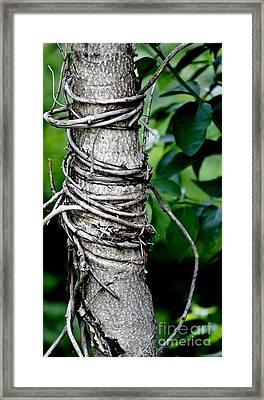 Framed Print featuring the photograph Choke by Lilliana Mendez