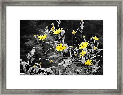 Chokeweeds Sc Framed Print by Mary Carol Story
