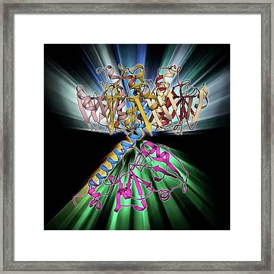 Cholera Toxin Molecule Framed Print by Laguna Design