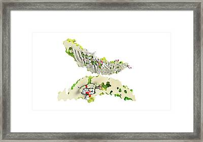Cholesteryl Ester Transfer Protein Framed Print by Ramon Andrade 3dciencia