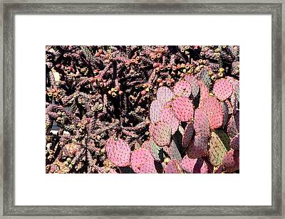 Cholla And Prickly Pear Framed Print by Joe Kozlowski