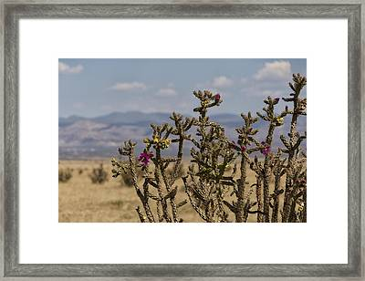 Cholla Cactus And Jemez Mountains 1 - Santa Fe New Mexico Framed Print by Brian Harig