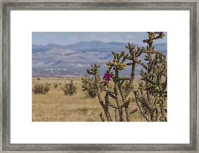Cholla Cactus And Jemez Mountains 2 - Santa Fe New Mexico Framed Print by Brian Harig