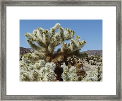 Cholla Cactus Framed Print by Deborah Smolinske