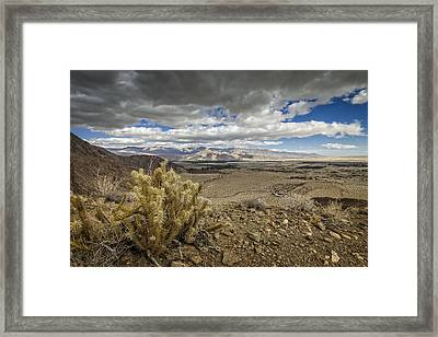 Cholla View Framed Print