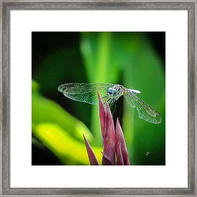 Chomped Wing Squared Framed Print by TK Goforth