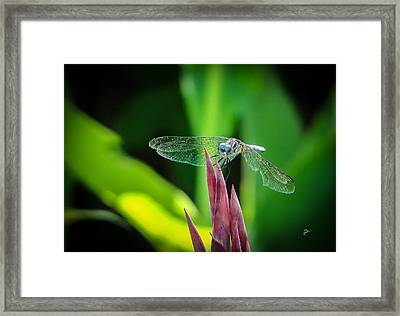Chomped Wing Framed Print by TK Goforth