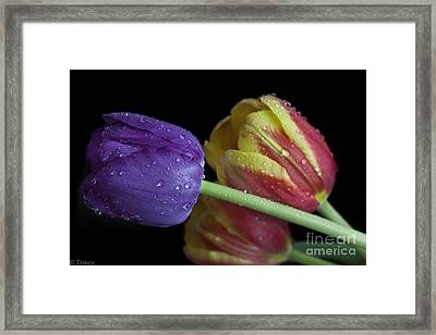 Choose Me Framed Print by Tracy  Hall