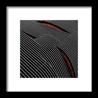 Aluminum Framed Prints