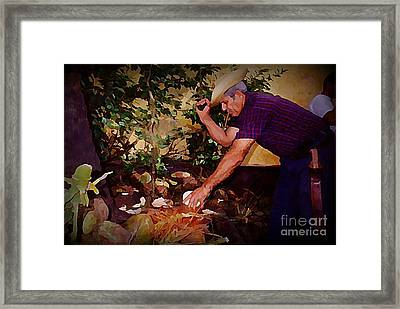 Chopping Coconuts In Cuba Framed Print