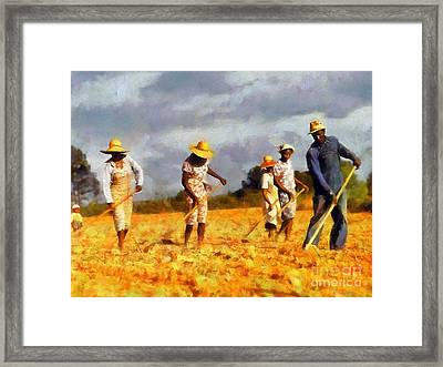 Chopping Cotton Framed Print