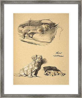 Chow And Pekinese, 1930, Illustrations Framed Print by Cecil Charles Windsor Aldin
